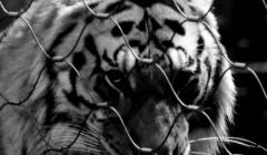 ESPAÑA: CONCENTRACIÓN EL 18 DE FEBRERO FRENTE AL CIRCO GOTTANI